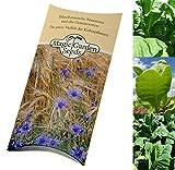 Saatgut Set:Zigaretten Tabak, 3 Tabaksorten für Zigarettenmischungen (je 500 Samen) in schöner Geschenk-Verpackung