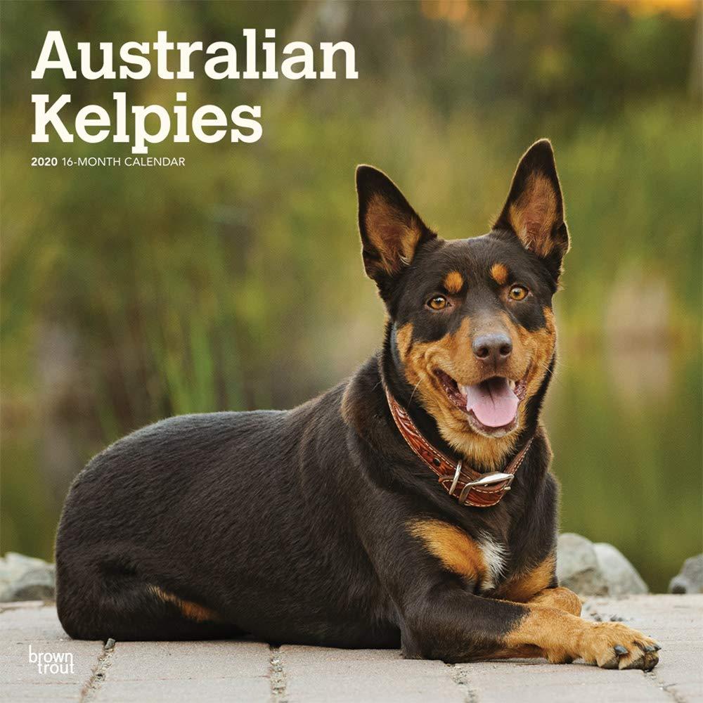 Australian Kelpies 2020 Square Wall Calendar