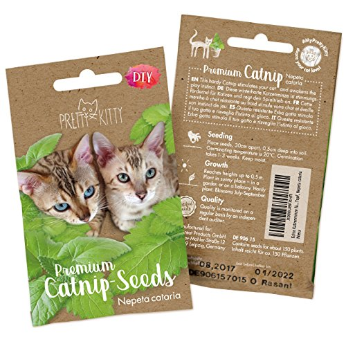 PRETTY KITTY Samen für Katzen, Premium Saatgut (Nepeta Cataria) für 150 Katzenminze Pflanzen