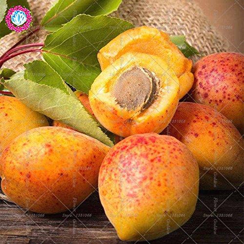 2pcs abricot Succulent arbres fruitiers semences petites graines des variétés tendre Mouthwatering ensemencée pour facile plantiation Balcon Jardin