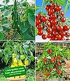 BALDUR-Garten Veredelte Snack-Gemüse Kollektion,4 Pflanzen Snacktomate Lupitas, Snackgurke Minik und Snackpaprika
