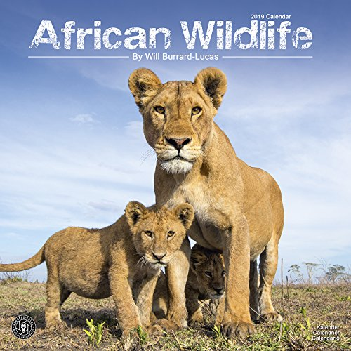 African Wildlife - Afrikanische Tierwelt 2019: Original Avonside-Kalender