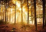 Fototapete Wald am Morgen XL 350 x 245 cm - 7 Teile Vlies Tapete Wandtapete - Moderne Vliestapete - Wandbilder - Design Wanddeko - Wand Dekoration wandmotiv24