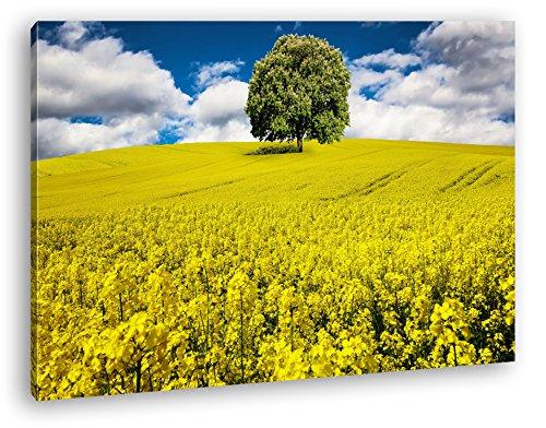 deyoli einzelner Baum im Rapsfeld Format: 100x70 als Leinwandbild, Motiv fertig gerahmt auf Echtholzrahmen, Hochwertiger Digitaldruck mit Rahmen, Kein Poster oder Plakat - Das Leben Auf Dem Land 100% Grünen