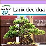 SAFLAX - Larice comune - 75 semi - Larix decidua