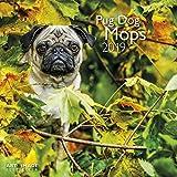 Mops 2019 - Broschürenkalender, Wandkalender, Tierkalender  -  30 x 30