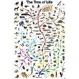 El árbol de la vida Póster Impresión de póster, 24x 36