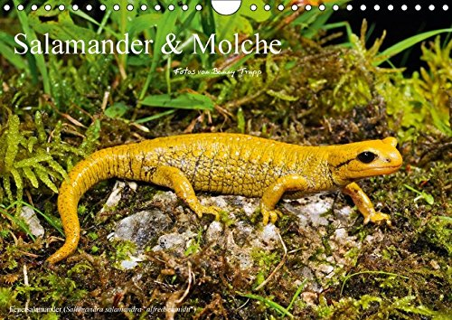 Salamander und Molche (Wandkalender 2018 DIN A4 quer): Fotokalender mit Bildern von Molchen und Salamandern (Monatskalender, 14 Seiten) (CALVENDO Tiere) [Kalender] [Apr 01, 2017] Trapp, Benny