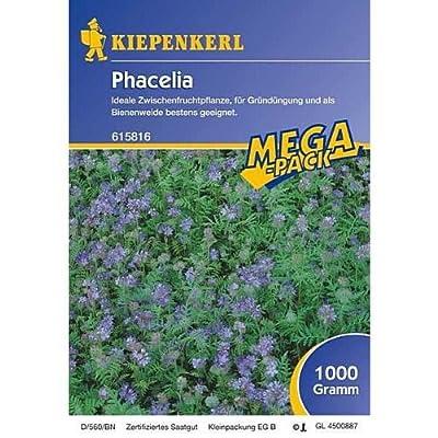 Phacelia -1 kg Gründünger Mega-Pack von Kiepenkerl auf Du und dein Garten