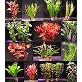 über 120 Aquarium-Pflanzen in 16 Bunde - großes buntes Sortiment für 200 Liter Aquarium