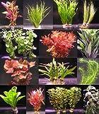 6 Bunde mit mehr als 40 Aquarium-Pflanzen - buntes Sortiment für ein 60 Liter Aquarium, Wasserpflanzen für Vorne, Mitte und Hinten