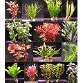 Wasserpflanzen für Aquarien
