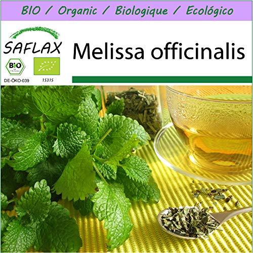 SAFLAX - BIO - Zitronenmelisse - 1000 Samen - Melissa officinalis