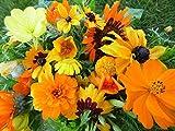 3-4 m² Sommerblumenmischung Traumgarten in Gelb und Orange Blumenmischung Blumensaat schnell blühend