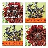 Sonnenblumen- 30 Samen der Sorte chocolate -Höhe : bis zu 2,00 m !!!