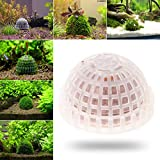 Moss Ball Filter Shrimp Media Live Plant Daxibb Aquarium Fish Tank Aquatic Decoration