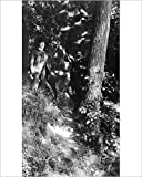 Photographic Print of Woodland scene near Ellesmere, Shropshire