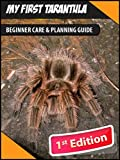 My First Tarantula: Beginner Care & Planning Guide