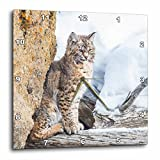 3dRose Wyoming-Yellowstone National Park-Bobcat Reloj de Pared, 10 x 10 - Inch