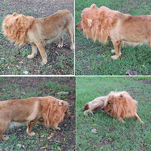 Hund Löwe Mähne Kostüme Hund Perücke Löwe Haar mit Ohren und Schwanz für Halloween und Party