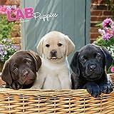 Labrador Retriever Puppies - Labradorwelpen 2019 - 18-Monatskalender mit freier DogDays-App (Wall-Kalender)