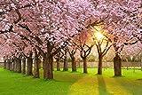 VLIES Fototapete (23V) CHERRY TREE GARDEN Größe 350 x 260 cm in 7 BAHNEN 50 cm Breite x 260 cm Höhe - hoch qualitativer fotorealistischer Digitaldruck ! SPEZIALKLEBER für Vliestapete inklusive! XXL Kirschbaum Garten Kirschblüten Bäume Natur Landschaft - Tapete Poster Wandbild Bildtapete Wall Mural
