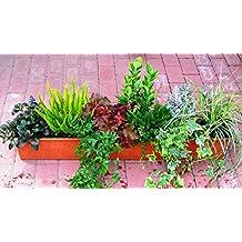 ganzjähriges, winterhartes Balkonpflanzen-Set für Balkonkästen 100 cm lan