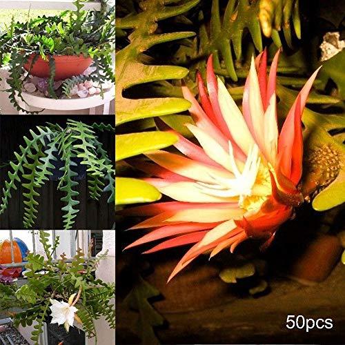 50 semi di epiphyllum seghettati per bonsai, decorazione per la casa e il giardino, semi di epiphyllum