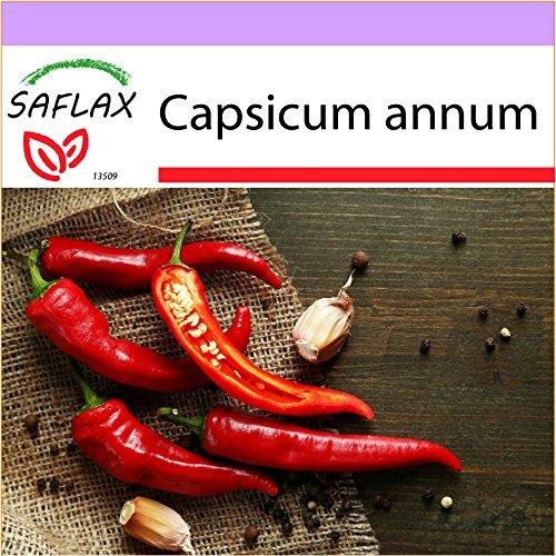 Galleria fotografica SAFLAX - Peperoncino di Cayenna - 20 semi - Capsicum annum