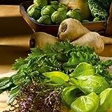 Suttons Seeds 185394 Speedy Veg Seed Leaf Salad Winter Mix Seed