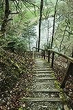 Artland Qualitätsbilder I Wandtattoo Wandsticker Wandaufkleber 60 x 90 cm Landschaften Wald Foto Grün C0SU Holztreppe im Donautal