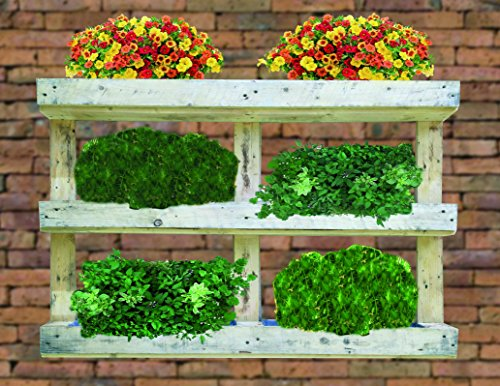Jardinière droit de Palet recyclé 120 x 81 x 13 cm (potager urbain)