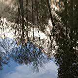 Keith Levit/Design Pics - Reflection of Trees and a