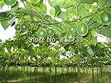Neue Ankunft 2 Samen Hausgarten Pflanze Monk Fruit World SWEETEST Buddha, Arhat, Langlebigkeit Fruchtsamen