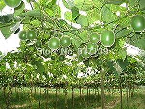 Neue Ankunft 2 Samen Hausgarten Pflanze Monk Fruit World SWEETEST Buddha,...