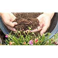 3p Organic Vermicompost Made of Cow Manure (0.8 kg)