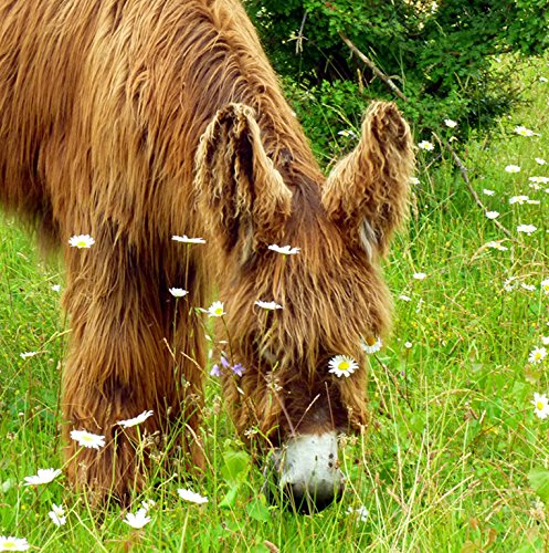 - Free Delivery /& Same Day Dispatch Before 2pm Wildlife Donkey Greeting Card Mix /& Match on 6x6 Cards - Any 2 for /£5 Mon-Fri Square 6x6 Approx Size