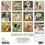 Image de Just English Setters 2017 Calendar