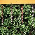 ANISTA reflektierende Windspirale | 6er Set | mehrfarbig zur Vogelabwehr Vogelschreck und zur Dekoration für Balkon und Garten von ANISTA-Industries bei Du und dein Garten