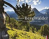 Faszination Bergwälder - DieschönstenWaldlandschaftenderSchweiz