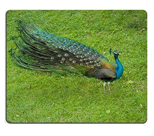 jun-xt-gaming-mousepad-immagine-id-24076838-bird-eye-peperoncino