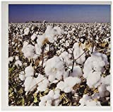 Best Buds Crop - 3dRose Greeting Cards, Agriculture, Lubbock, Cotton Plant Review