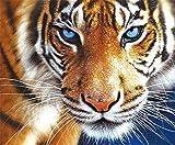 Yeesam Art 5D Diamanten-Malset- Wilder Tiger -Strassperlen-Gemälde zum Selbstgestalten, Malen nach Zahlen, Kreuzstich-Stickerei
