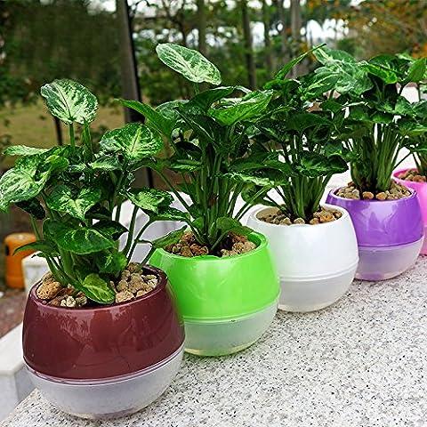 mkono Lot de 3pots à fleurs d'arrosage automatique d'arrosage en plastique PP bureau Home Decor Pots de fleurs (couleurs variées), Green/Pink/White/Yellow, M