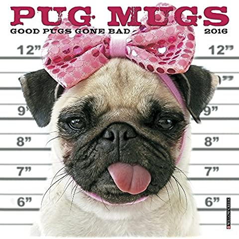 2016 Pug Mugs Mini Wall Calendar by Willow Creek Press (2015-08-22)