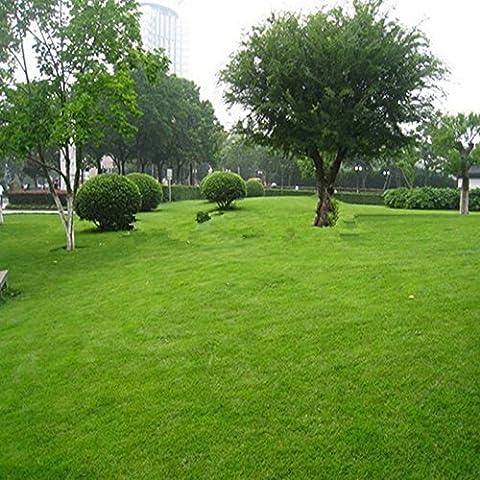Prato seminale Turf 800pcs erba semi freschi verde morbido Runner Turfgrass per fioriere vaso di fiori