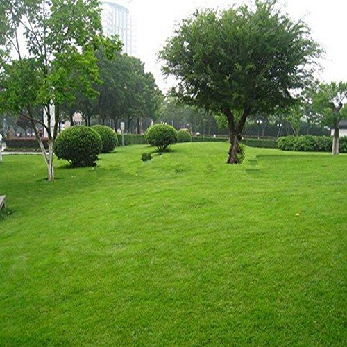 prato-seminale-turf-800pcs-erba-semi-freschi-verde-morbido-runner-turfgrass-per-fioriere-vaso-di-fio