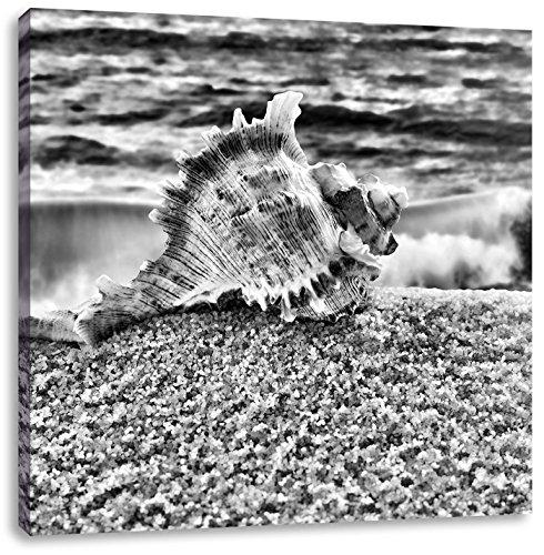Monocrome, Muschel am Strand, Format: 70x70 auf Leinwand, XXL riesige Bilder fertig gerahmt mit Keilrahmen, Kunstdruck auf Wandbild mit Rahmen, günstiger als Gemälde oder Ölbild, kein Poster oder Plakat