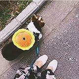 Yyzhx Haustier Rucksack aus der Schultasche Schulter selbst Rucksack Traktion Seil kleine Hündchen Tragetasche