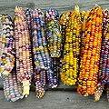 SummerRio 10/20/50 Stück Mais Samen Lebensmittel essbares organisches seltenes Gemüse Korn sät Hausgarten von SummerRio - Du und dein Garten